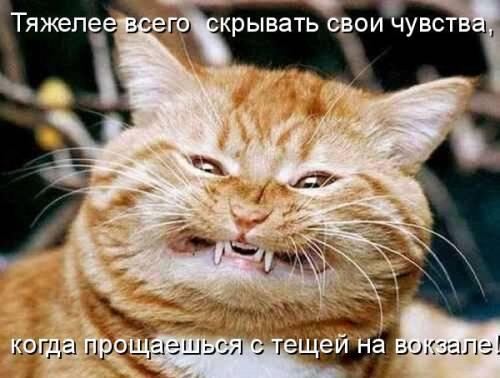 http://bwwt.ucoz.ru/_ph/4/2/561652670.jpg
